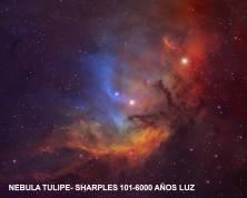 Nebula Tulipe