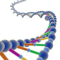 Descripción: http://4.bp.blogspot.com/-AMPdDLT2YPY/UTo9i5mAPxI/AAAAAAAAAok/4dsBJyK356E/s200/ADN.jpg